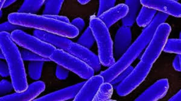 e coli treatment antibiotics