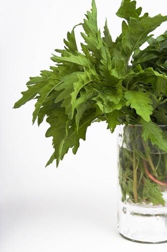 health benefits of epazote