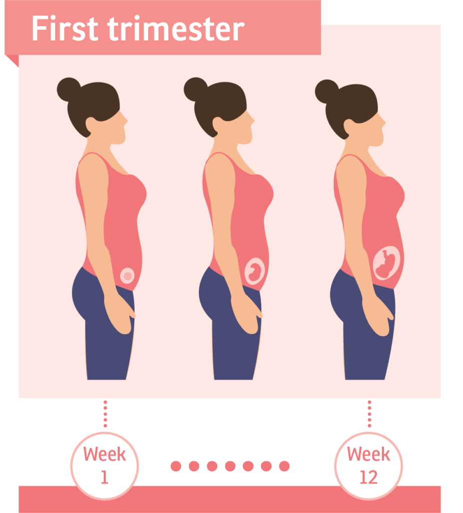 Physical Changes During the First Trimester of Pregnancy