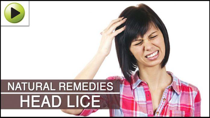 head lice natural treatments