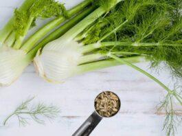 health benefits of fennel bulb
