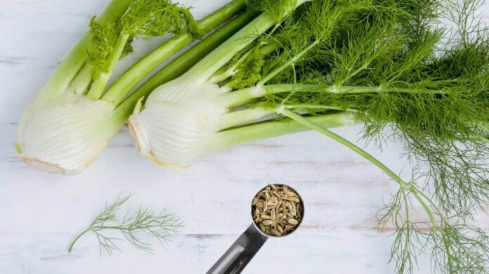 health benefits of fennel bulb