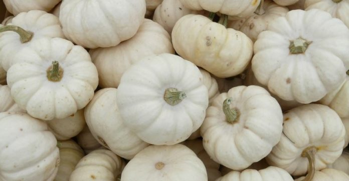 health benefits of pumpkin puree