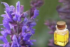 hyssop essential oil health benefits