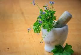 Health Benefits of Andrographis