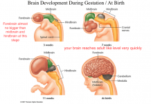 improve the brain development