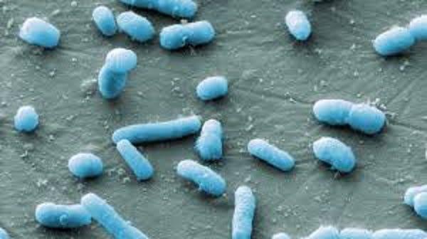 is e coli contagious