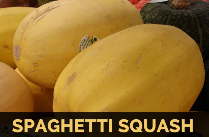 is spaghetti squash keto