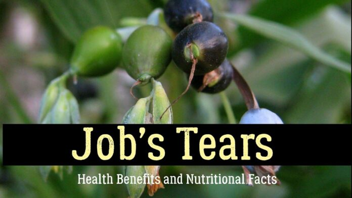 job's tears meaning