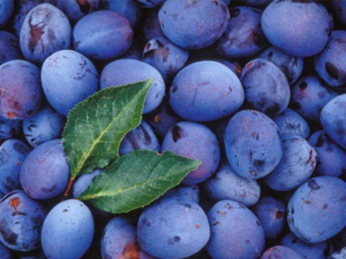 Health benefits of damson plums