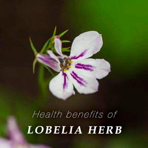 Health Benefits Of Lobelia