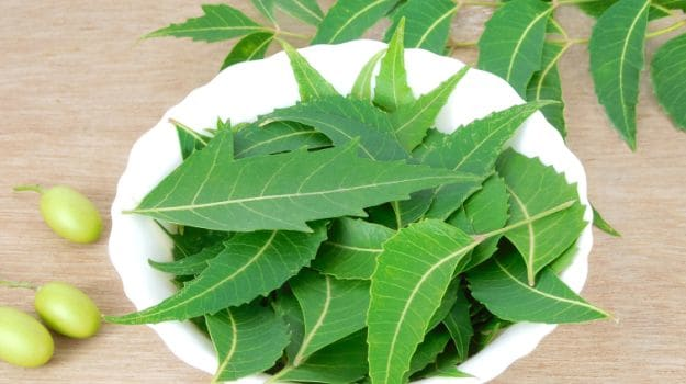 medicinal uses of neem pdf
