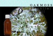 Oak moss essential oil