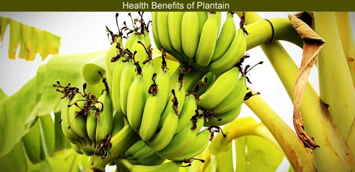 raw plantain health benefits