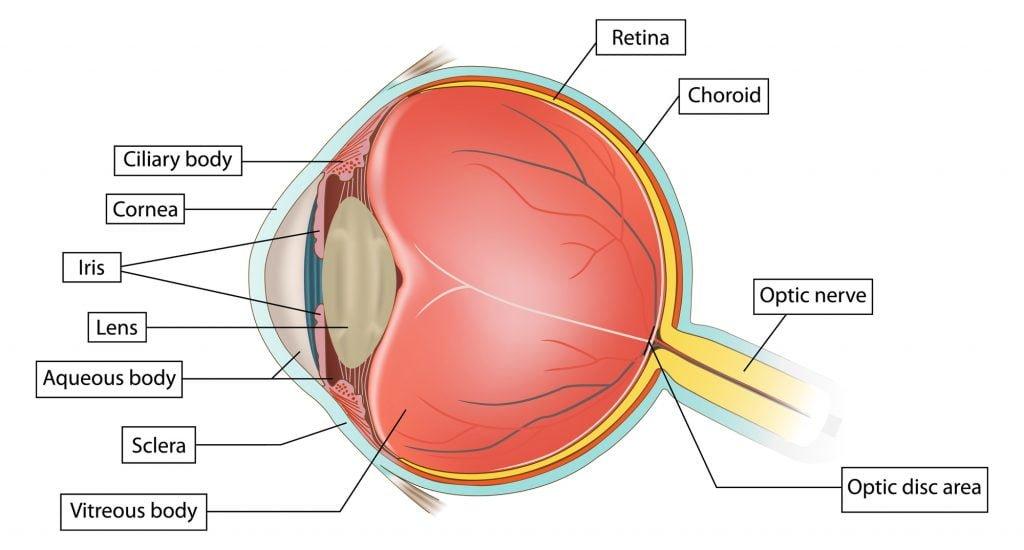retinitis pigmentosa diagnosis