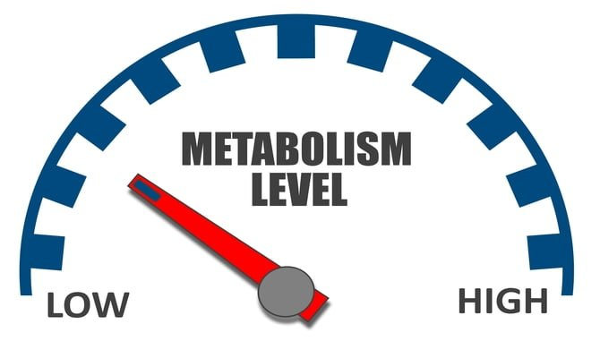 slow metabolism diet