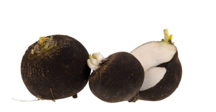 spanish black radish candida