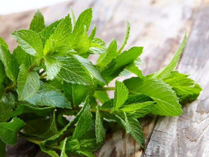 when to drink peppermint tea