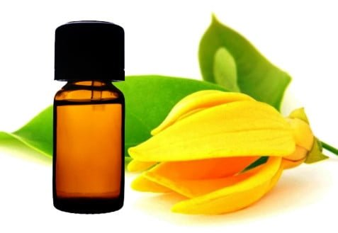 Health benefits of ylang ylang essential oil